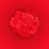 Vector flower of Carnation Stock Photography