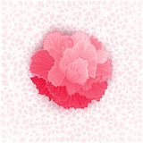 Vector flower of Carnation Royalty Free Stock Photography