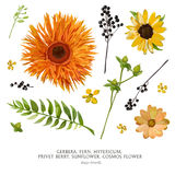 Vector flower elements set collection: Various Flowers Leaves Ge Royalty Free Stock Photo