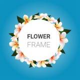Vector flower frame. Plumeria Stock Photos