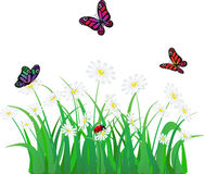 Vector flower. Grass, butterfly and ladybird Royalty Free Stock Photography