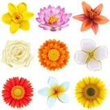 Vector Flower Icons Set 2 royalty free illustration