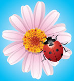vector flower and ladybird Royalty Free Stock Images