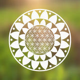 Vector Flower of Life Symbol and Lotus Flower on a Natural Background Stock Image
