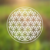 Vector Flower of Life Symbol on a Natural Background Royalty Free Stock Image