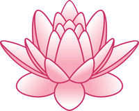 Vector flower lotus Stock Photo