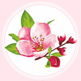 Vector flower of Sakura blossom. Japanese flowering cherry in a various kind. It can be used for textile wallpaper, wedding invitation, mother's day or tiles stock illustration