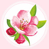 Vector flower of Sakura blossom. Japanese flowering cherry in a various kind. It can be used for textile wallpaper, wedding invitation, mother's day or tiles vector illustration