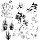 Vector flower set bw Royalty Free Stock Photo