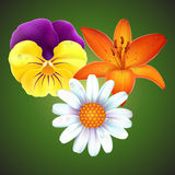 Realistic flower set. Realistic viola tricolor, lily and daisy vector set Royalty Free Stock Photos