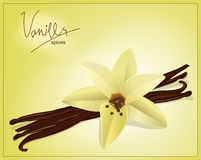 Vector flower and vanilla pods Stock Photos