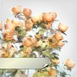 Vector Flower Watercolor Roses Bush Stock Images