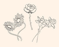Vector flowers Royalty Free Stock Images