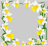 Vector, flowers, daffodils, a variety of early flowers beauty, love, tenderness. Awakening of nature Stock Photos