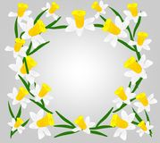Vector, flowers, daffodils, a variety of early flowers beauty, love, tenderness. Awakening of nature Stock Photo