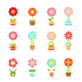 Vector flowers in different pots. Floral set isolate on white background Royalty Free Stock Photos