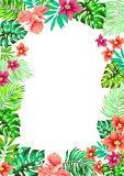 Vector flowers. frame for invitations. Royalty Free Stock Photography