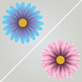 Vector  flowers  on grey background Royalty Free Stock Photography
