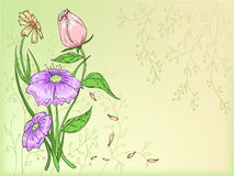 Vector flowers hand draw with background Stock Image