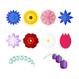 Vector flowers isolated on white background. Set of colorful floral icons in flat style. Stock Photos