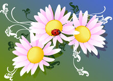 Vector flowers and ladybug. Illustratoin with flowers and ladybug Stock Image
