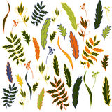 Vector flowers, leaves and plants Royalty Free Stock Photography