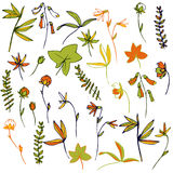 Vector flowers, leaves and plants Stock Photo