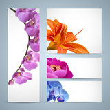 Vector flowers, orchid, lily and peony blossom Stock Photography