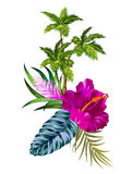 Vector flowers and palms Stock Images