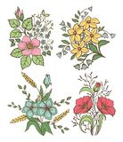 Vector flowers set. Colorful floral collection with leaves and flowers, Hand Draw Vintage . Royalty Free Stock Photography