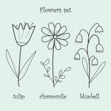 Vector flowers set stock illustration
