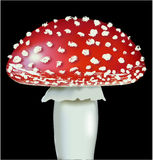 Vector fly agaric Stock Images
