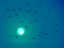 Vector flying birds against pale moon. Royalty Free Stock Images