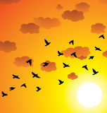 vector flying birds, clouds and bright sun Stock Images