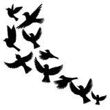 Vector flying birds silhouettes Stock Photos