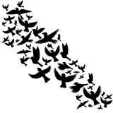 Vector flying birds silhouettes Royalty Free Stock Photos