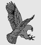 Vector flying eagle. Vector illustration of eagle  isolated on white Royalty Free Stock Image