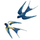 Vector Flying Swallows Royalty Free Stock Photos