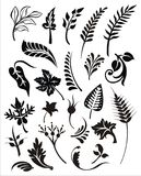 Vector foliage set Royalty Free Stock Images