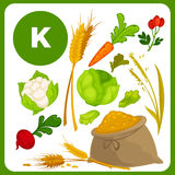 Vector food with vitamin K. Set with illustrations of food with vitamin K. Ingredients for health: lettuce, spinach, cauliflower, cabbage. Healthy nutrition Royalty Free Stock Images