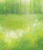 Vector Forest Background Fotografía de archivo