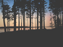 Vector forest Royalty Free Stock Photography