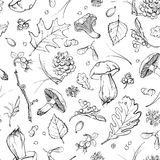 Vector forest set Royalty Free Stock Photos