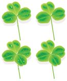 Vector four and three Leaf Clover. With raindrops and without Royalty Free Stock Photos