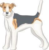 Vector. Fox terrier. Stock Photo