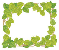 Vector frame, birch leaves. Royalty Free Stock Photos
