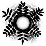 Vector frame of bouquet leaves on white background. Rowan and acacia silhouette leaf Stock Image