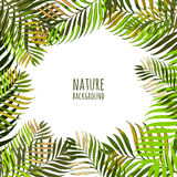 Vector frame with coconut palm leaves. Floral summer background with tropical green leaves. Royalty Free Stock Images