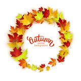 Vector frame with colorful autumn leaves, card template, natural backdrop Stock Photos