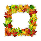 Vector frame with colorful autumn leaves, natural design, background Royalty Free Stock Photography